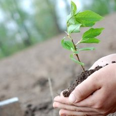 The growing of trees and plants for climate change mitigation feat