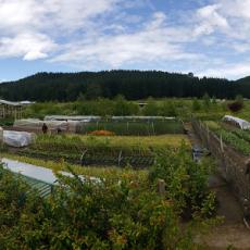 The Koanga Institute Farming for the Future feature