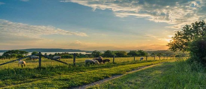 Photo of When Space is Abundant: Using Acreage to Generate Income For Your Homestead