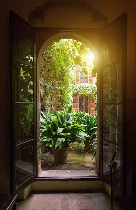 View from open window to the garden.