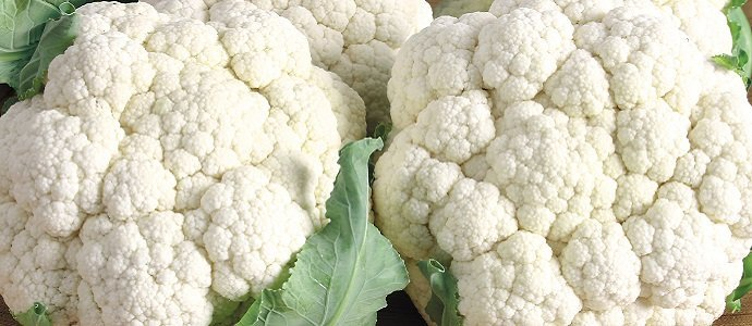 two beautiful cauliflowers