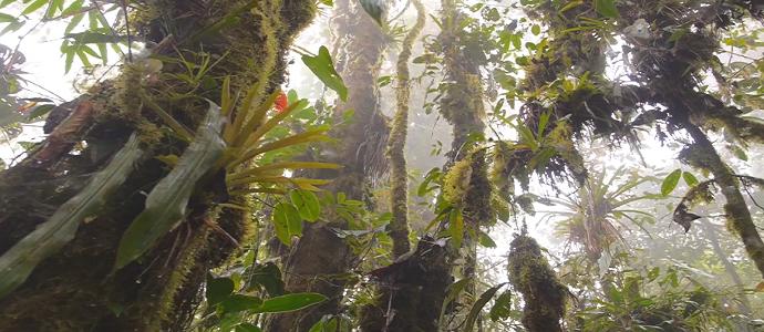 Photo of Los Cedros Under Threat – Film