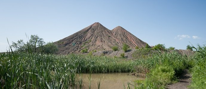 Photo of Soil Cover Systems Help to Grow Native Species on a Waste Rock Pile