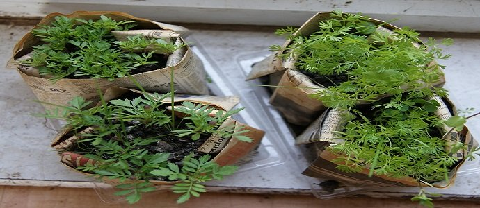 how to make biodegradable seedling pots