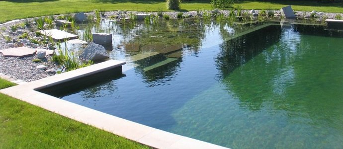 Photo of The Benefits of a Natural Pool