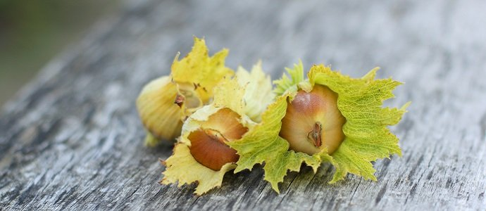 Photo of The Amazing Hazel – The Essential Guide to Everything you need to know about Hazels