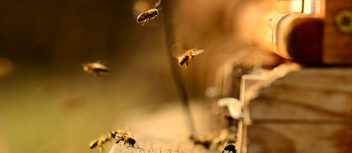 Photo of Traces of Pesticides Discovered In 75 per cent Of The World's Honey