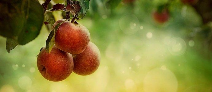 Photo of Amazing Apples
