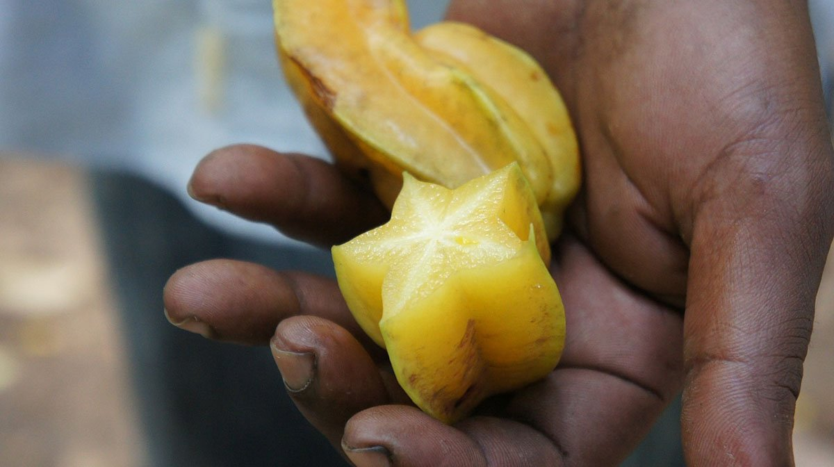 Carambola in the palm of a hand.