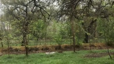 Photo of Texas Food Forest and the Results of Good Design.