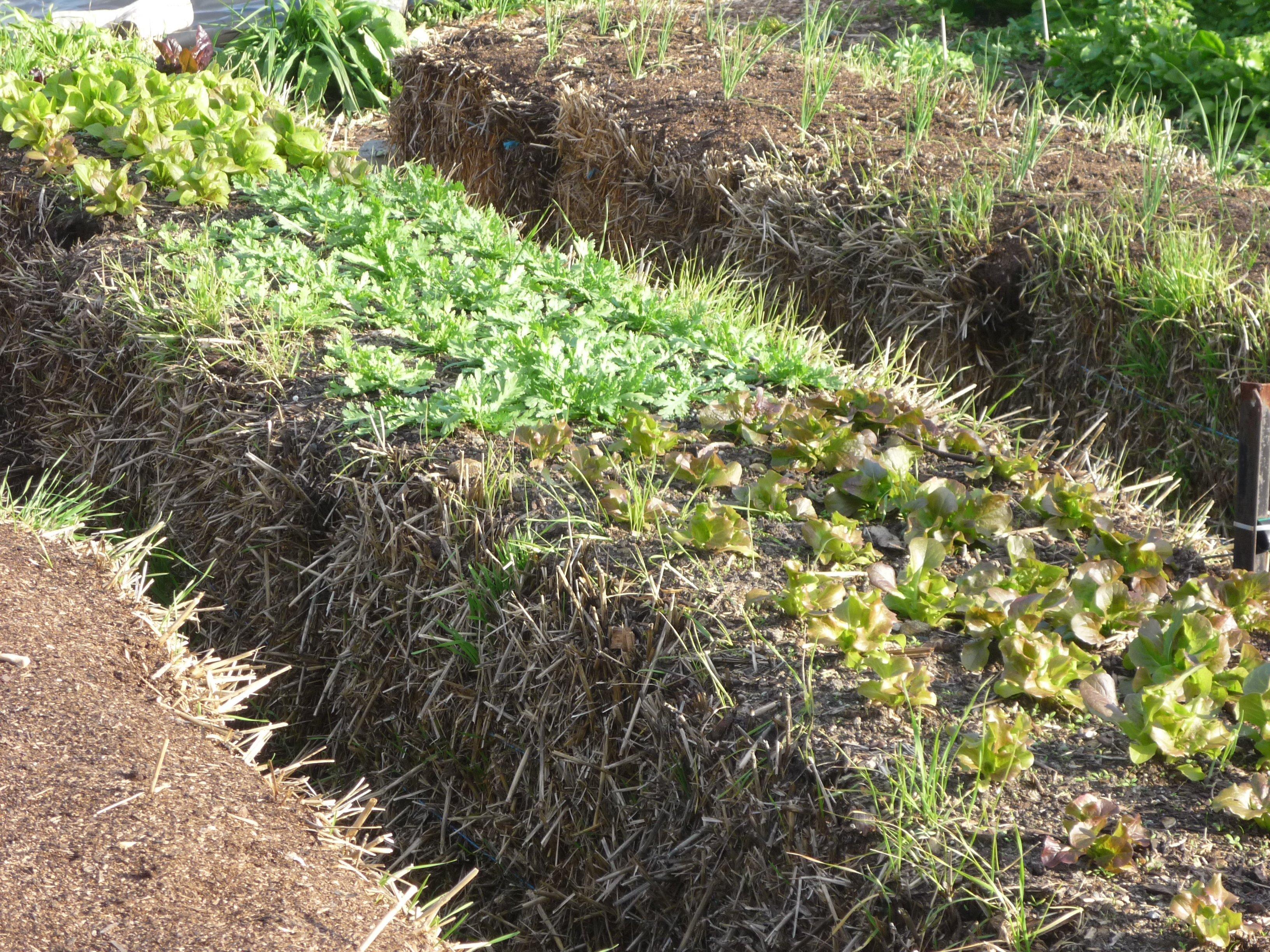 Photo of Straw Bale Gardens