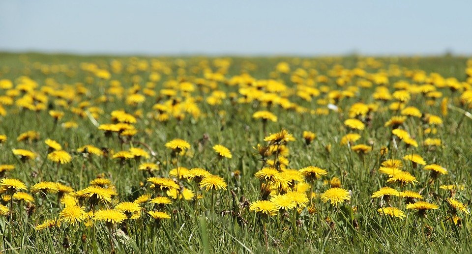 Photo of Weeds Aren't Actually All That Bad