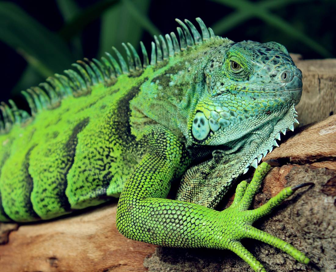 Photo of What do lizards, procrastination, and Permaculture principles have to do with your brain? Part 5