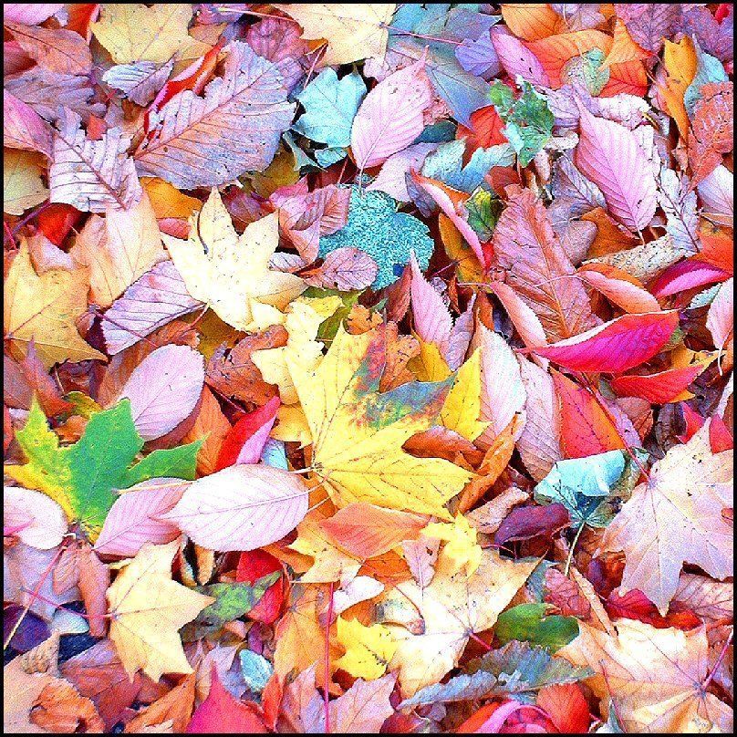 Photo of Useful Garden Projects for Autumn Leaves