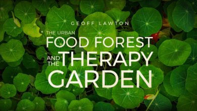 Photo of An Urban Food Forest and Therapy Garden:  Angelo and Lana's Journeys