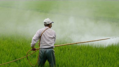 Photo of The battle against bugs: it's time to end chemical warfare