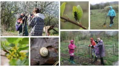 Photo of Bio Pest Control, Green Manure Trials, Oeschberg Pruning and Wildlife in the Gardens