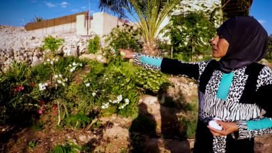 Photo of Permaculture in the Desert
