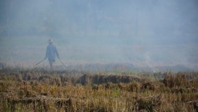 Photo of Biochar as an Alternative to slash and burn farming