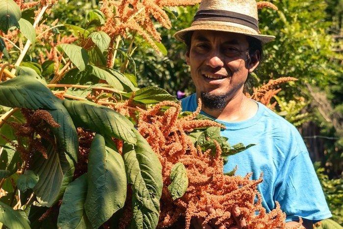 Instituto Mesoamericano de Permacultura - Permaculture Magazine Prize Runner Up