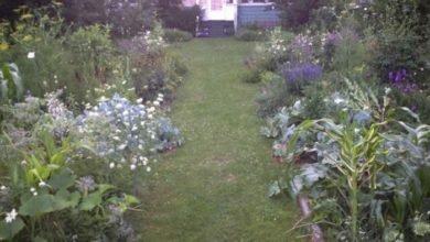 Photo of Designing No-Work Food Gardens