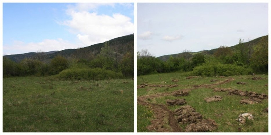 Phronensis Garden Before and After shot