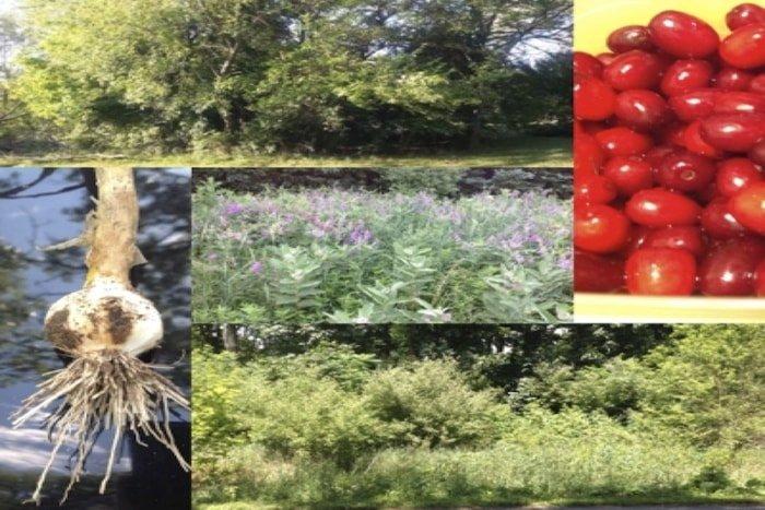 The Garlci Food Forest