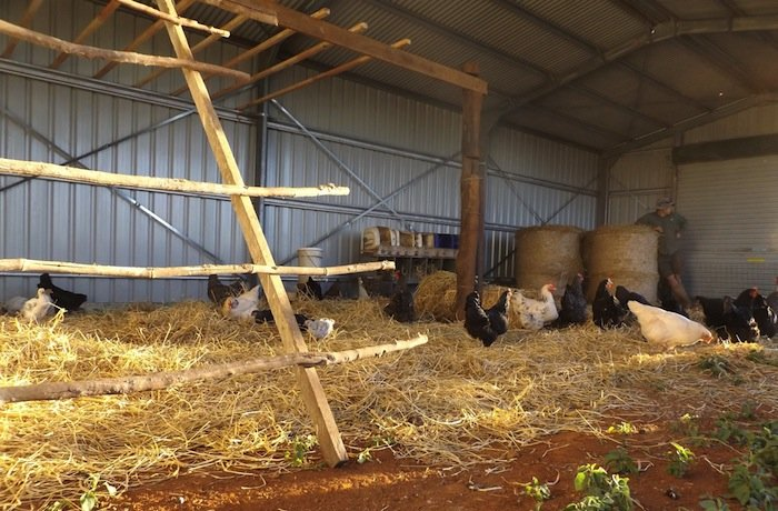 New Chicken Shed