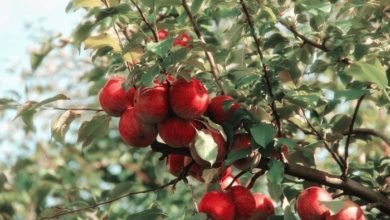 Photo of How to Grow Fresh Fruit All Year Long
