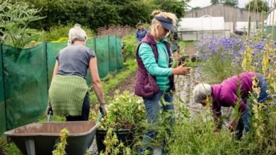 Photo of Garden sharing in 2019