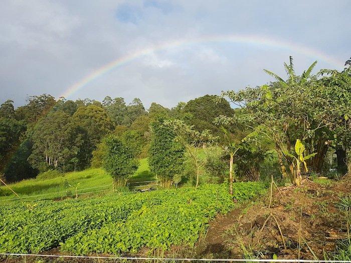 Rainbow over Sams Farm