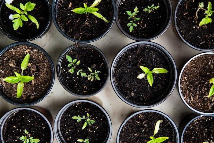 Pot Plants Compost